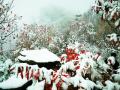 又一波北京的雪景