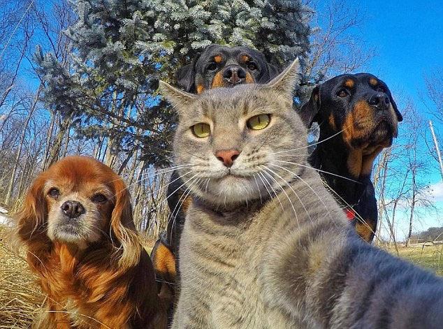 """宠物界滑稽""""自拍照"""""""