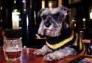 """最受欢迎的""""酒吧狗"""""""