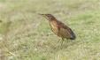 为了一只鸟停修一座岛,温州紧急叫停白鹿洲公园小岛修整工作