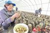 驻马店市正阳县新阮店乡:食用菌种植走上脱贫致富路