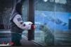 """真实版""""美女与野兽"""":90后美女在青藏高原饲养雪豹"""