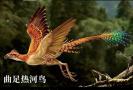 1亿年前的鸟长啥样?
