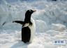 入境观赏活企鹅今年首进青岛口岸 将落户荣成动物园