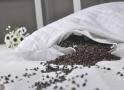 不同枕头清洗有诀窍:决明子枕头千万别沾水