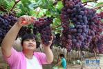 四五月份正是减肥期 哪些水果晚上不宜多吃?