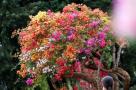 一树开出6种花