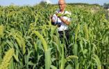 乡之情电子商务:打造互联网+农产品平台带动地方农业经济腾飞