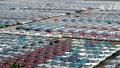 去年亏损16亿、产销量已归零 夏利汽车停产