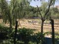 紫荆山公园新添一景:西园南边水系芳华初现