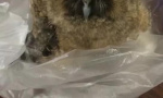 哈尔滨几名小学生上学途中捡到猫头鹰 民警已妥善处置