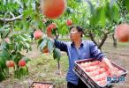 安次区葛渔城镇:特色种植为乡村振兴注入活力