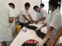 工地挖出受伤大蟒蛇