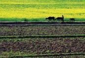 农村土地承包法修正案草案二审:细化土地经营权融资担保