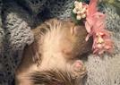 被棄松鼠獲悉心呵護