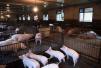 非洲猪瘟已现身中国100多天 买猪肉的人少了吗?