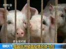 农业农村部:中国非洲猪瘟疫情总体可控