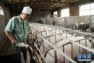 河南:加强科技攻关 促进生猪产业转型发展