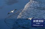 索尼:2020年计划招400名应届生 欢迎中国学生