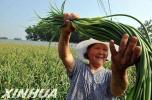 农业强农村美农民富 河北农业农村经济平稳向好