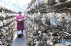 河南嵩县:产业发展助脱贫