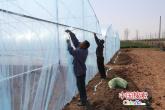 河南叶县:果蔬大棚助力村级集体经济发展