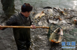 """河北:""""五个禁止""""斩断市场销售长江流域非法捕捞渔获物产业链"""