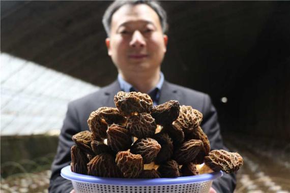 河南郏县:种植羊肚菌 幸福满乡村