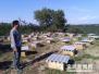 姚林东:养蜂筑就幸福路
