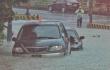 台湾持续大暴雨!野生鱼和龟被冲上岸满街跑