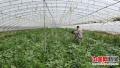 中国开发推广土壤改良技术 果蔬作物产量将提高10-30%