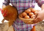 禽流感消息:云南确诊4例H7N9病例
