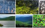 大兴安岭林区经济转型增长 为东北振兴积蓄力量