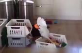 最精神分裂的鹦鹉