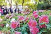 第36屆中國洛陽牡丹文化節落幕 呈現多亮點