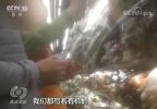 挂羊头卖狗肉 有了这个标签这种蔬菜身价暴涨十倍
