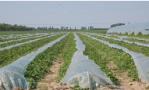 吉林投入近3.5亿元支持棚膜经济发展