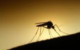 蚊子又开始活跃!南京今夏蚊子预计比去年多三成
