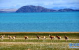 今日要闻:青藏高原仍是地球上最洁净地区之一 欧盟又开天价罚单谷歌表示不服