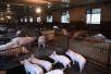 北京顺义和陕西西安等地排查出非洲猪瘟疫情