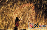 火树映红祥和美景 欢鼓催征奋斗新春