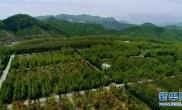河南栾川:昔日矿渣堆