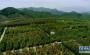 河南栾川:昔日矿渣堆 今日绿满山