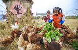"""永清:""""农业+文化+旅游""""推动乡村振兴"""