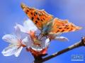 河南滑縣:春日蝶戀花