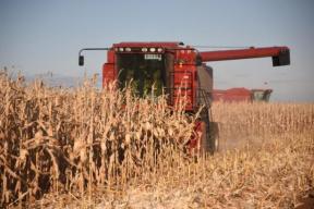 口粮绝对安全、百姓米面无忧——关于当前粮食市场供应问题的对话