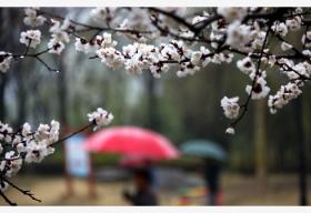 北京雨水中午趋于结束 明起转晴气温节节高