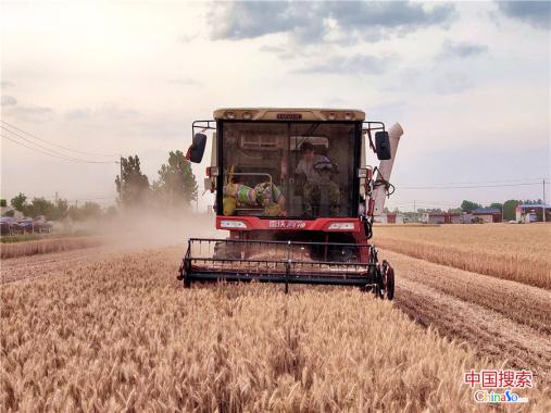 河南鲁山县已抢收小麦39余万亩