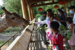石家莊動物園端午活動全攻略